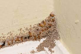signs of termites infestation